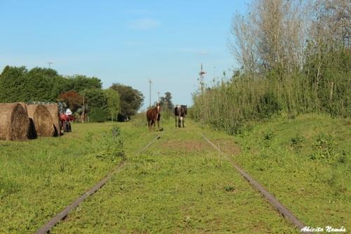 Caballos en la vía