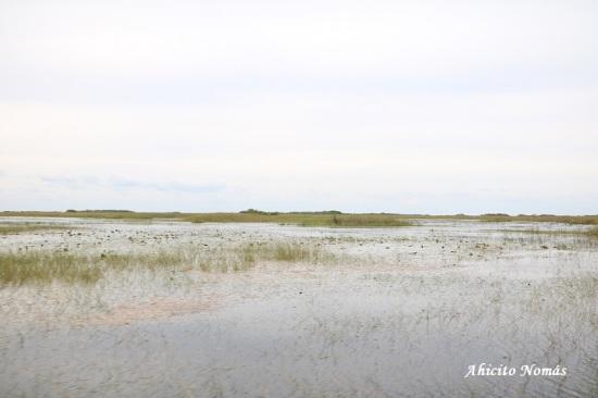 Paisaje pantanoso