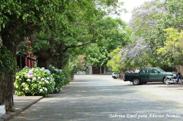 Calle floreada frente a la plaza