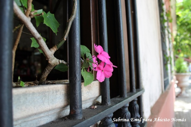Flores en la vetana
