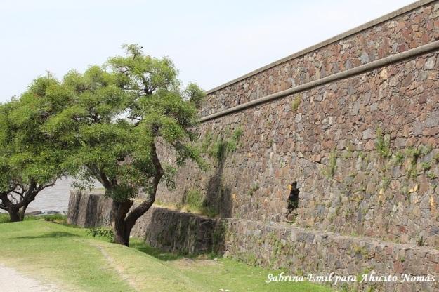 Arboles en la muralla