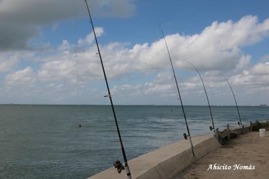 Pesca en el parque