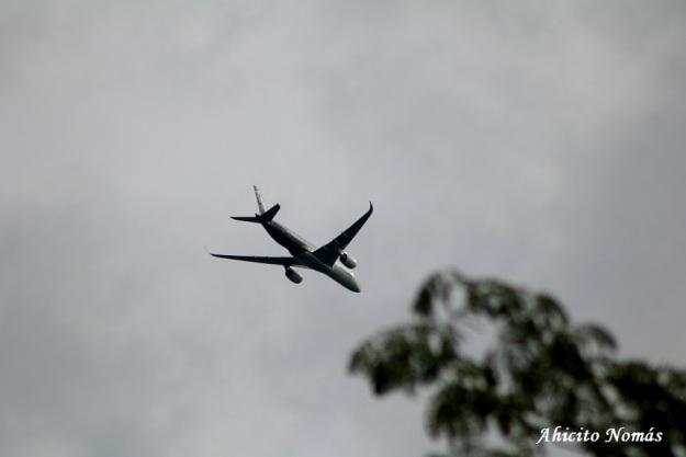 6 - A350 avanza sobre los arboles