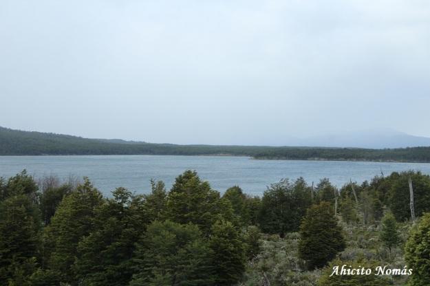 Lago detras de los árboles