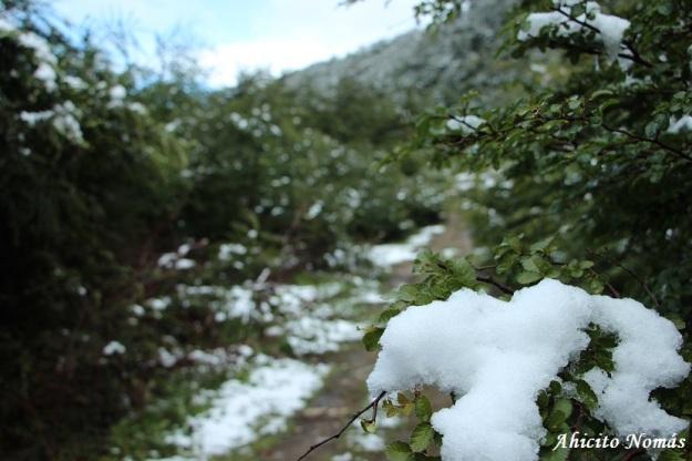 Nieve en los árboles