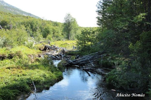 Diques cortan el arroyo
