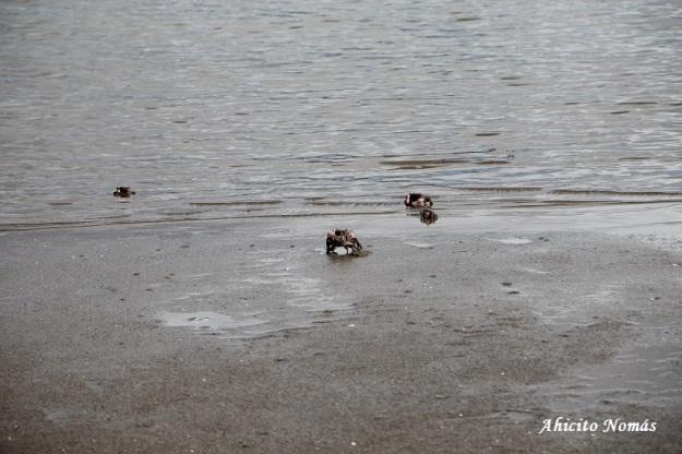 Cangrejos en la orilla