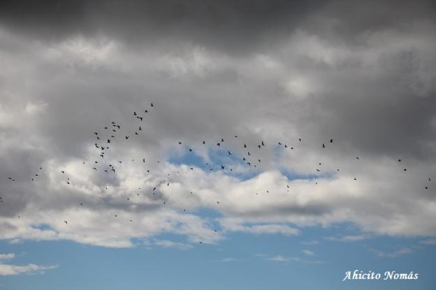 Aves contra las nubes