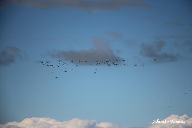Aves en el cielo