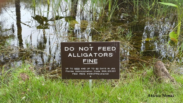 Dont Feed Alligators