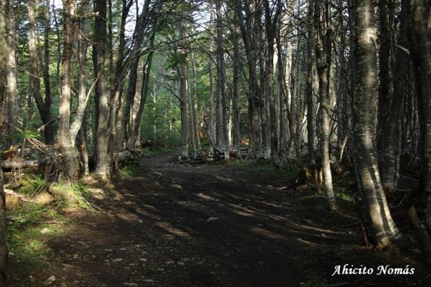 El camino dentro del bosque