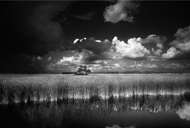 Ochopee -Big Cypress National Preserve 6x10 (2)