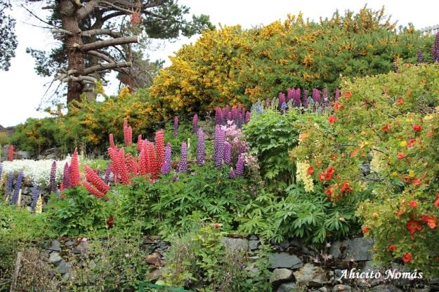 colores-del-jardin