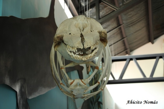 frente-a-la-falsa-orca