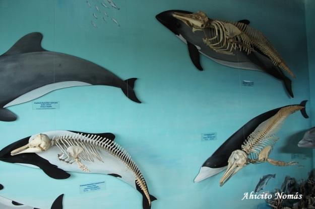 los-delfines