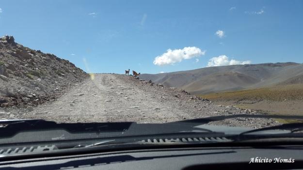 bajando-la-montana-al-trote