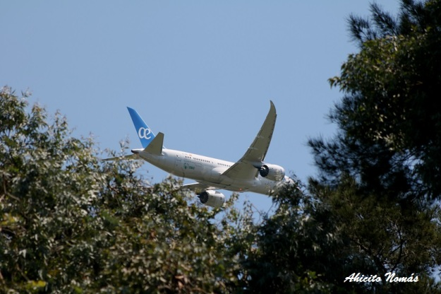 ux-787-se-mete-en-los-arboles