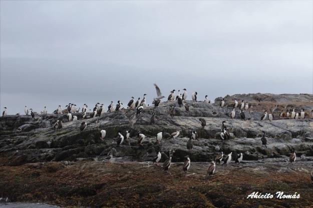 isla-de-las-aves