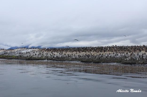 isla-llena-de-aves