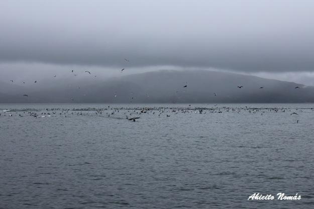 mar-de-las-aves
